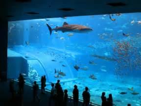 acheter aquarium acheter aquarium