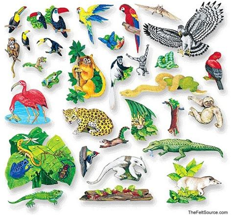 printable rainforest animal cards rainforest rescue
