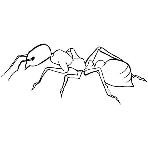 dibujos infantiles para colorear de hormigas im 225 genes de hormigas para colorear gratis imprime y pinta