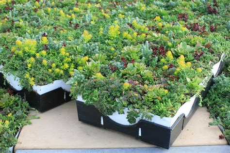 rooftop plants liveroof 174 hybrid green roof system selected for five new