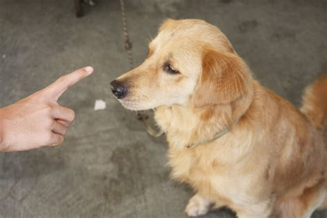 picking a puppy how to a trainer 7 steps with pictures wikihow