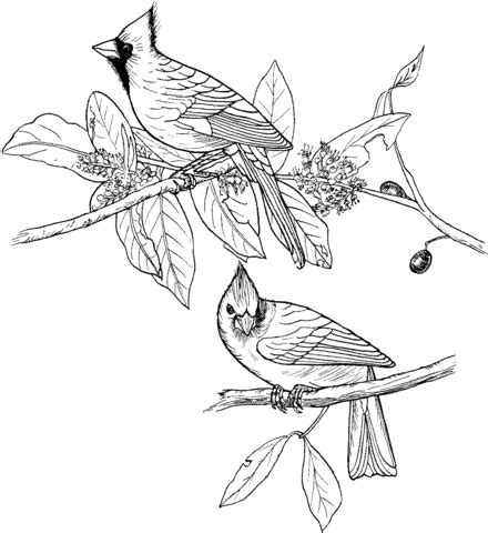red cardinals coloring page supercoloring com