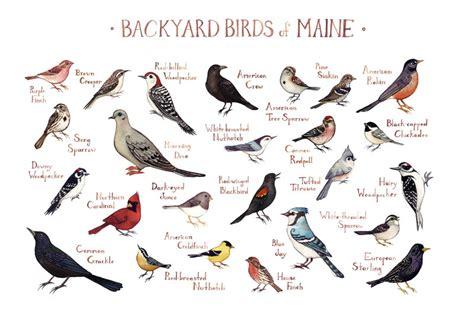 maine backyard birds field guide art print watercolor