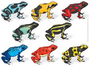 frog colors poison dart frog facts for active