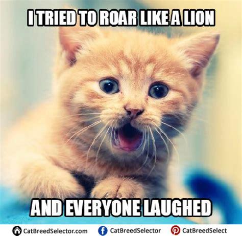 Kitten Meme - kitten memes cat breed selector