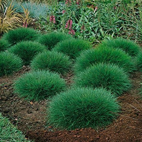 pflanzen immergrün winterhart bodendecker und andere pflanzen garten schl 252 ter