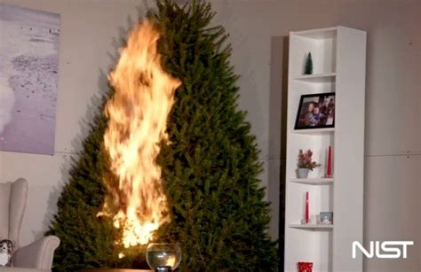 this one thing can prevent a christmas tree fire tiphero