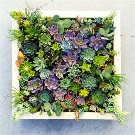 Vertical Succulent Wall Planter In Quick Easy Steps Diy How To Make A Vertical Wall Garden