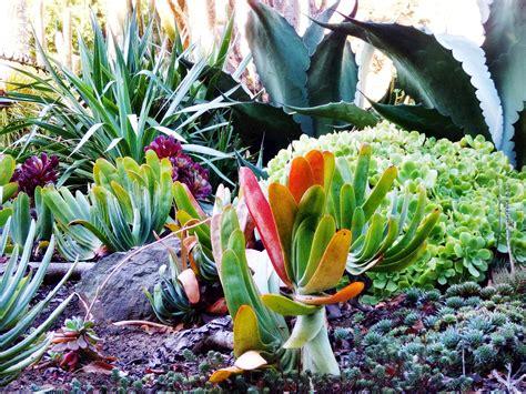 succulents mediterranean garden collections mcbg inc 2017 fort bragg california