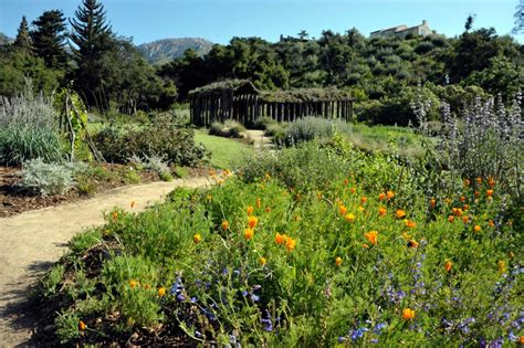 Botanic Gardens Santa Barbara The 8 Best Hikes In Santa Barbara Visit Santa Barbara