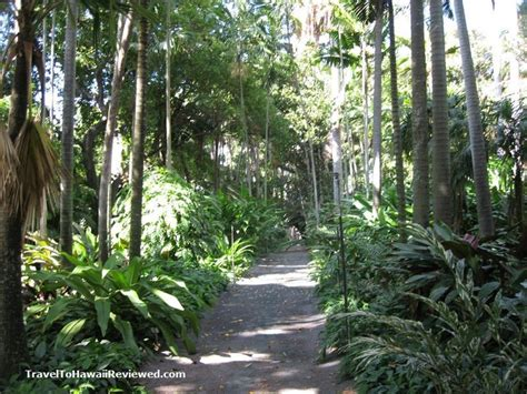 Botanical Garden Honolulu 19 Best Images About Hawaii On Pinterest Gardens Swim And Shore