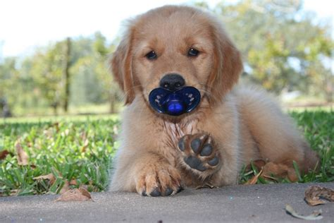 puppy pacifier puppy pacifier omg i lov it