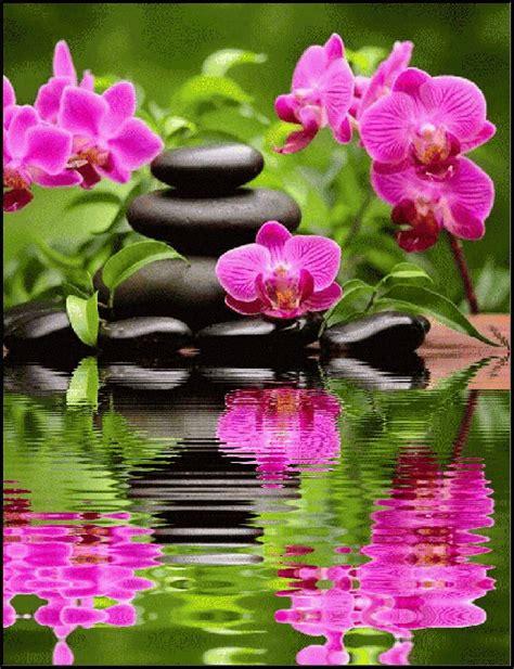Imagenes Hermosas Zen Animadas | pin de jacinta mesas en flores pinterest flor flores