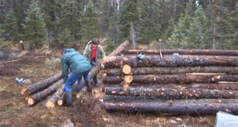 How Many Logs To Build A Log Cabin by Tiny Pioneer Log Cabin In Alaska Built In 15 Days