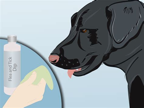 how to keep ticks dogs 4 ways to keep ticks from your dogs wikihow