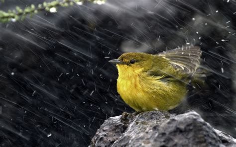 lime bird under the rain 1920 x 1200 animals