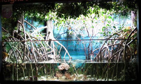 mangrove exhibit orangejoshuas flickr