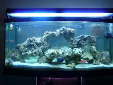 Live Rock Aquascape Designs by Aquascaping Live Rock Houses Plans Designs