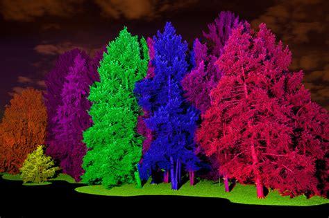 morton arboretum lights 2016 lights guide morton arboretum flips the