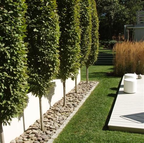 landscape border ideas modern garden dma homes 92218