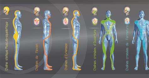 cadenas musculares segun busquet cadenas musculares guiomarix