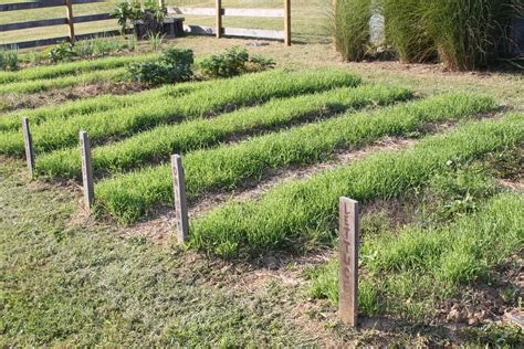 Simple Tips To Building Great Garden Soil Naturally Best Cover Crop For Vegetable Garden