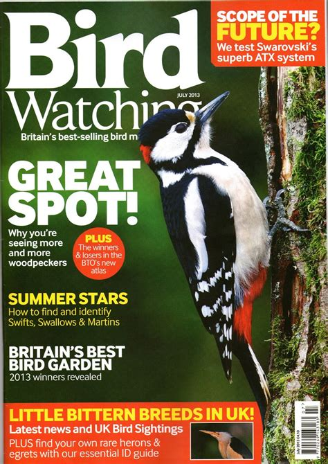 wader quest july bird watching magazine article