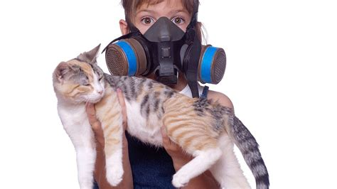 how to eliminate dog odor in the house how to get rid of cat urine smell in the house pet vet