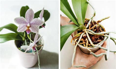 piante da appartamento come curarle orchidee come curarle e coltivarle al meglio casafacile