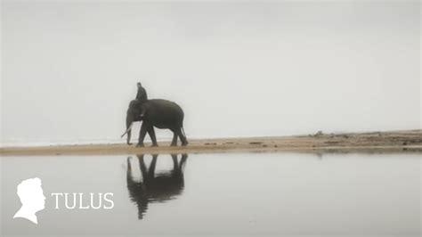 Maxy Gajah tulus gajah official