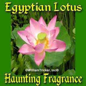 Lotus Flower Essence Lotus Flower Perfume Essence Image Mag