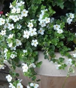 outdoor plants lou s flower world