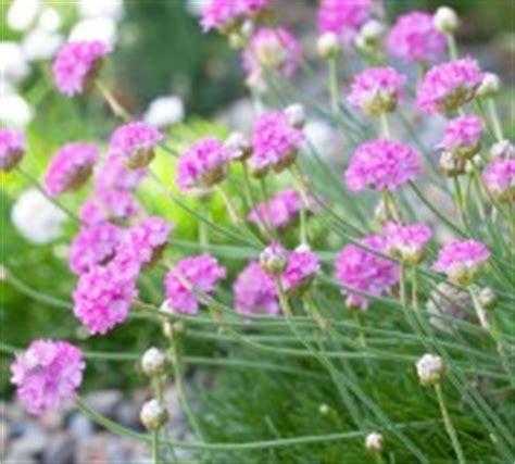 Die Sch Nsten Balkonpflanzen 3395 by Die Sch 246 Nsten Rosa Blumen Im Garten Anbauen Gartengestaltung