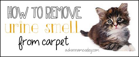 how to remove urine smell how to remove urine smell from carpet ask