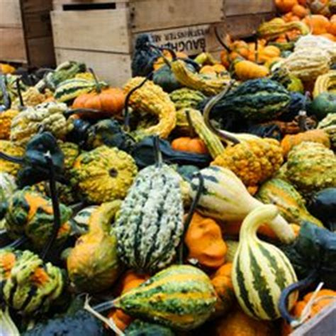 Gourd Ls For Sale by Baugher S Orchard Farm 87 Fotos 40 Beitr 228 Ge