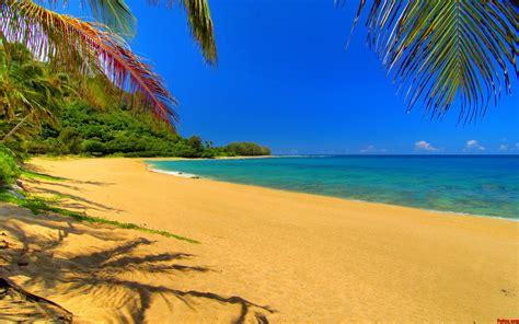 imagenes de paisajes en la playa paisaje exotico arboles playa fondos de pantalla fotos de