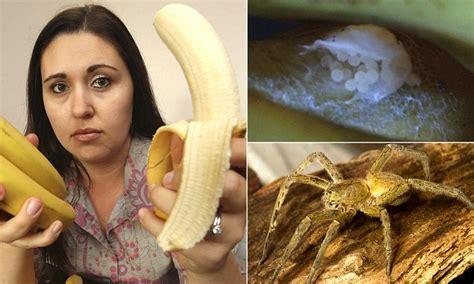 Bedroom Handcuffs Brazilian Wandering Spider Eggs Found In Tesco Bananas