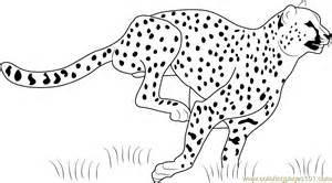 what color is a cheetah cheetah running coloring page free cheetah coloring