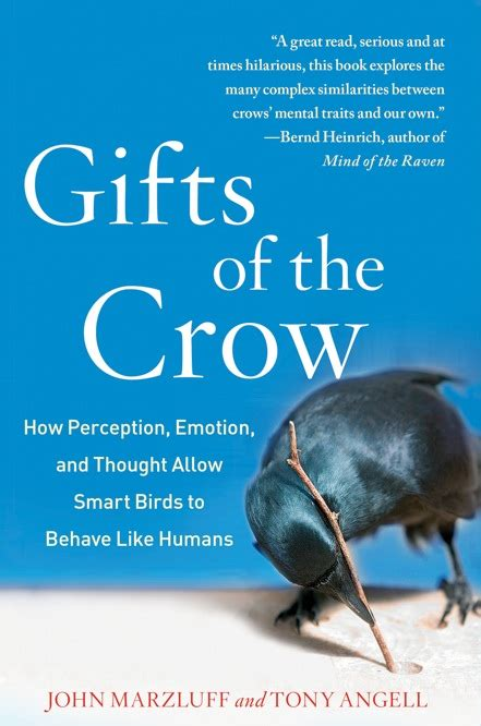 Something To Crow About Gifts Of The Crow