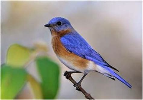gunston hall blog a report on the bluebird trail at