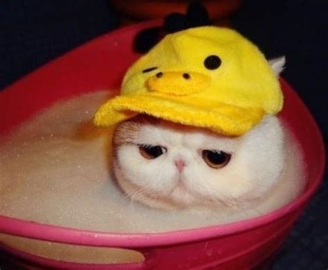 Pink Cat Snoppy duck hat cat cats in hats
