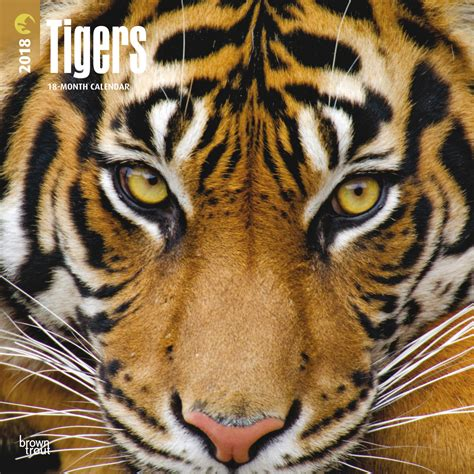 tigers calendars 2018 on europosters