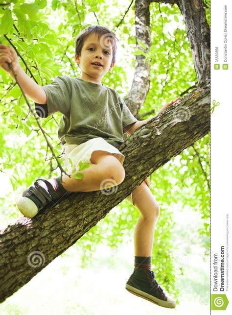 boys tree proud boy climbed in tree royalty free stock image image