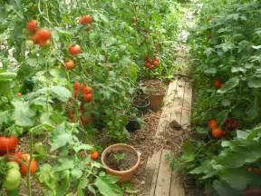 pourquoi semer sous serre ou sous abri jardiner avec