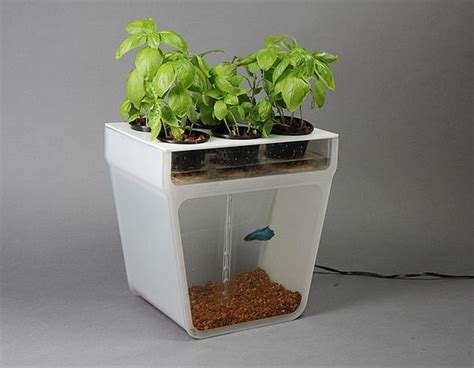 Fish Tank Planter by Self Cleaning Fish Tank Combined With A Planter Top Food Lab