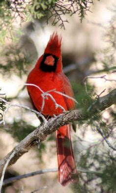 1000 images about animals birds on pinterest gray