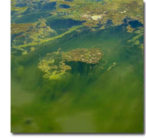 Algaelang The Algae Killer algae algae removal florida