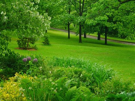 Home Design 3d For Android Free Download green rain rain nature wallpaper 16 picture gallery