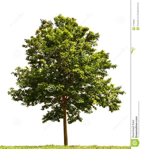 where to put a tree in a small room small tree stock photography image 17768582