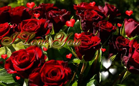 pictures of hearts and roses hearts and roses wallpapers free images